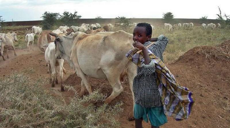 مصر توقع صفقة كبرى لإستيراد اللحوم الإثيوبية
