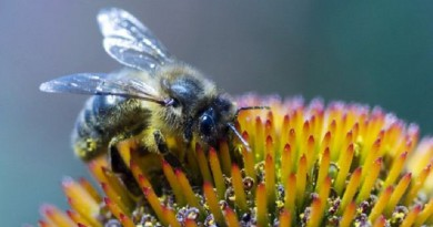 وفاة اسبانية بعد خضوعها لعلاج بلدغ النحل