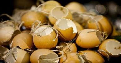 تعرف على الاستخدامات الغير متوقعة لقشر البيض!