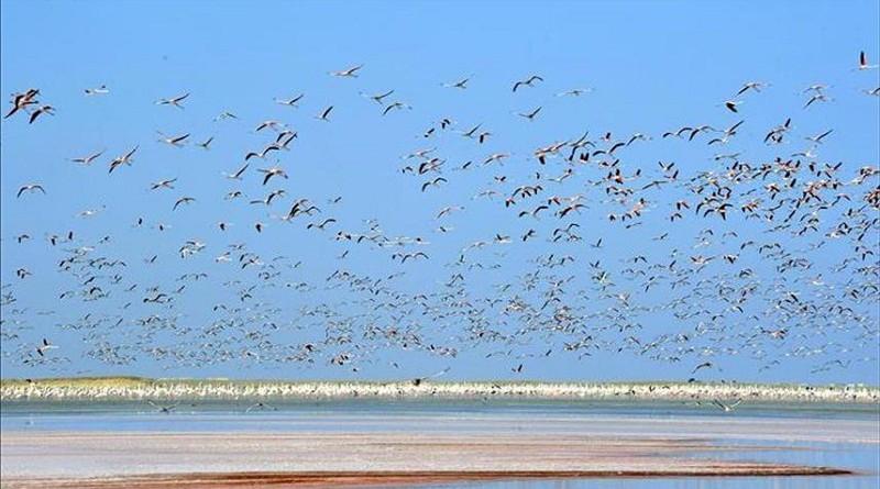 1.5 مليون طائر يحلقون في سماء مصر