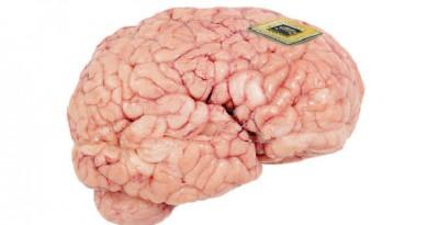 أصغر محفز عصبي في العالم