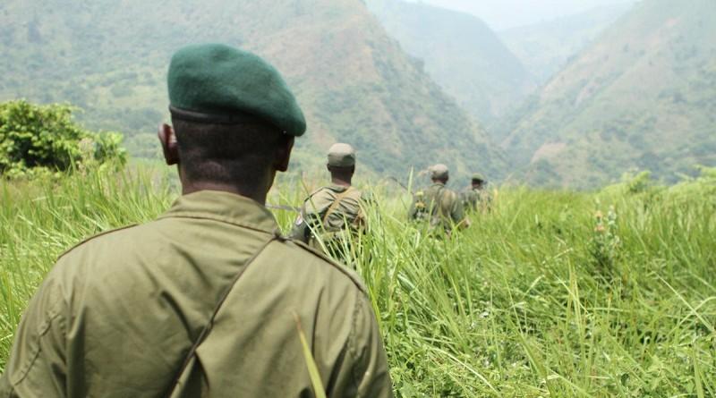الكونغو :خطف سائحين بريطانيين وقتل حارسهم داخل محمية طبيعية