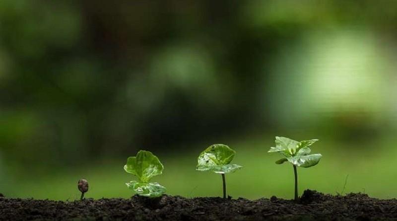 اتصالات بين النباتات لدعم نمو جاراتها