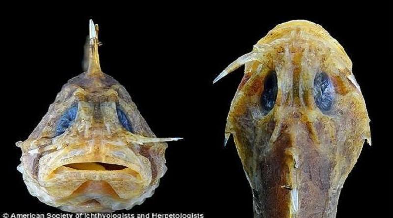 أخطر سمكة في العالم!
