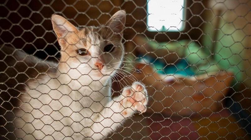 ارتفاع كبير لعدد المدانين بإساءة معاملة الحيوانات