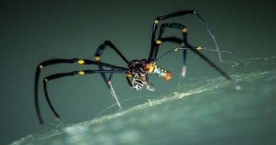 """اكتشاف عنكبوت """"شفاف"""" ومرعب"""