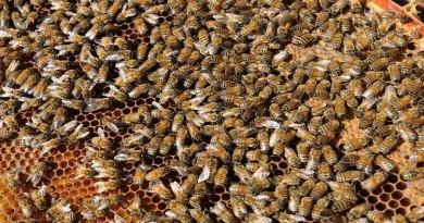 مبيدات قاتلة تخل بالتوازن البيئي وتعرض وجود النحل للخطر