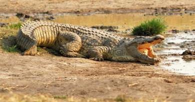 حادث مأساوي...تمساح يفترس رجلًا أمام أعين ابن أخيه