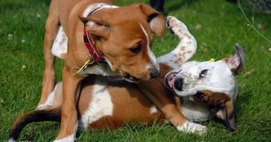 """تكتشف المفاجأة بعد فض """"عراك كلبين""""!"""