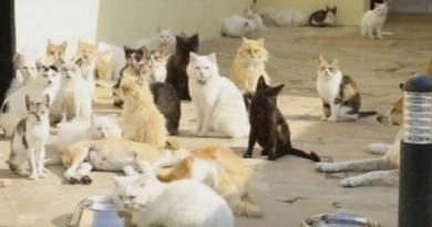 هل أكلت القطط وجه وعين ويد «عجوز الساحل» ؟!