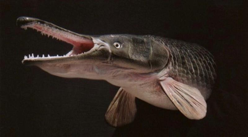 Terrifying Lake Creature Triggers Swimming Ban in Guangzhou Park (VIDEO)