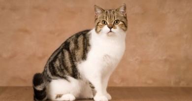 قطة تحاكي التماثيل ببراعة مطلقة! (فيديو)