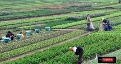 """بروتوكول تعاون بين الزراعة والموارد المائية لتفعيل """"كارت الفلاح"""""""