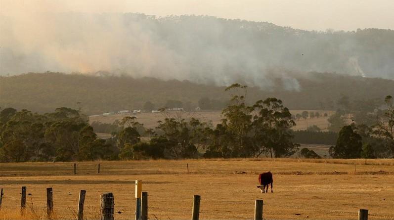 حرائق الغابات تدمر أكثر من 30 منزلًا في أستراليا