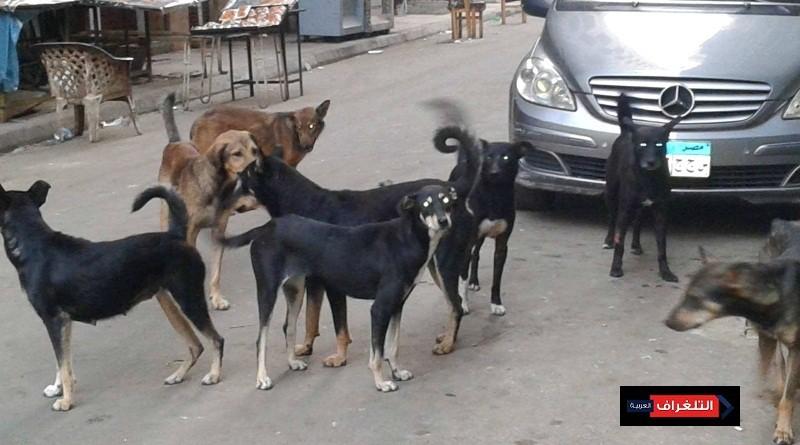 """""""الكلاب الضالة"""" بين التصدير والقتل والأخصاء"""