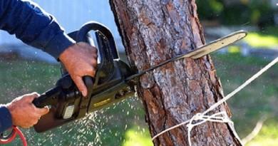 السجن 4 سنوات لمن يقطع شجرة في هذه الدولة