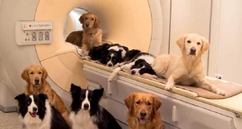 الكلاب يمكنها التنبؤ بنوبات التشنجات