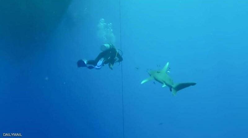 سمكة قرش تعض سائح في البحر الأحمر