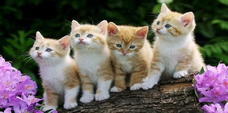 دراسة: القطط تتجاهل من يناديها