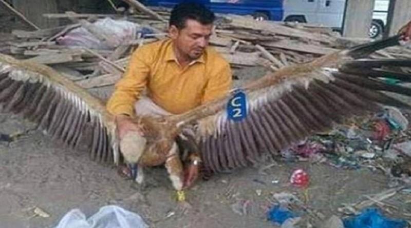 اليمن.. اعتقال نسر بتهمة التجسس