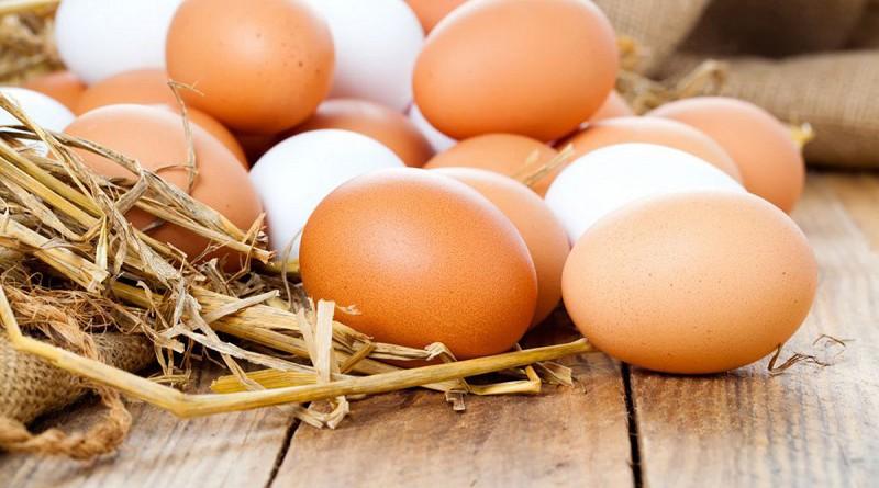ألمانيا.. خبراء تغذية يدافعون عن البيض