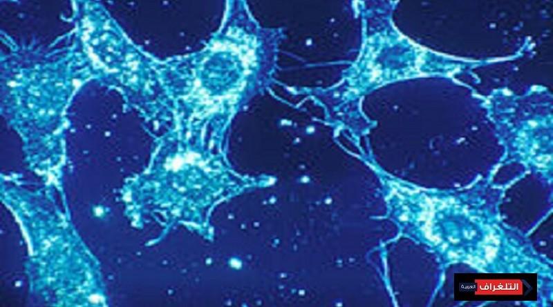 علماء ينجحون في تجديد الخلايا البشرية