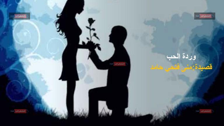 """وردة الحب … """"شعر"""" منى حامد"""
